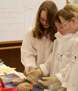 Three Forest Bluff students investigate a brain while in a laboratory at Lake Forest College, as mentioned in a Montessori testimonial