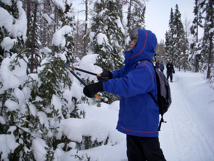A boy on a Montessori camping trip cuts a tree to help clear a trail for dog sledders.