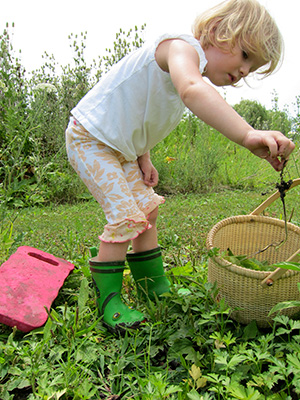 A Montessori child picks an herb from her home garden and places it into a woven basket.