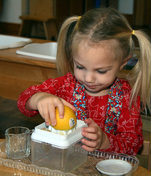 A child in a Montessori classroom chooses to squeeze a lemon to prepare a refreshing beverage for her class.