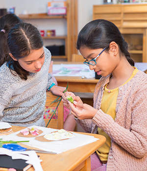Students in a Montessori elementary classroom examine the parts of a flower