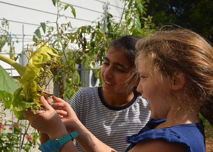 Montessori students examine a sunflower and interact with the natural environment