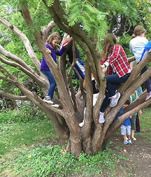 Seveal children of varying ages climb a tree with many low branches