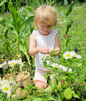 A young child in nature observes a daisy plant