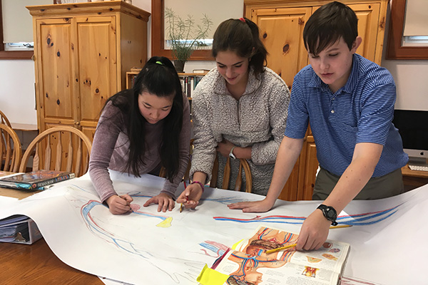 Students in a Montessori classroom work together on a large illustration of the human circulatory system